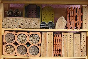 Wildbienen. Nistplätze und Ernährung